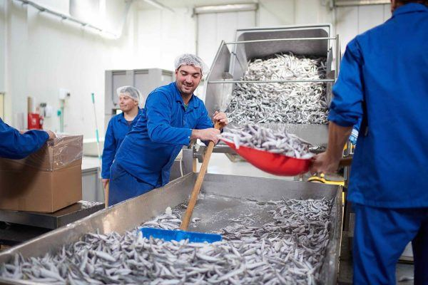 Seafood Processing Uniforms